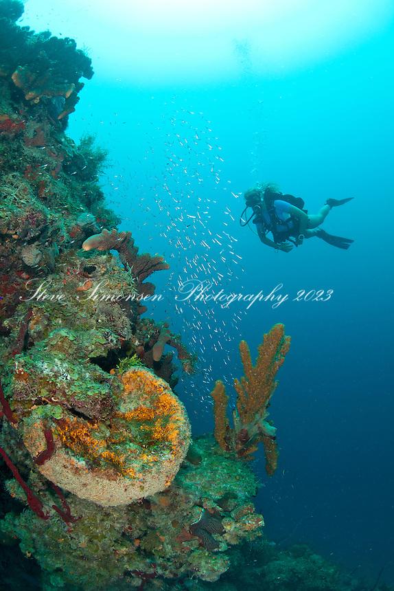 Heather diving Salt River Canyon west<br /> St. Croix<br /> U.S. Virgin Islands