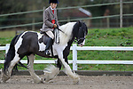 Ring 1. BSPS area 15 winter qualifying show. Brook Farm Training Centre. Essex. UK. 03/03/2019. ~ MANDATORY Credit Garry Bowden/Sportinpictures - NO UNAUTHORISED USE - 07837 394578