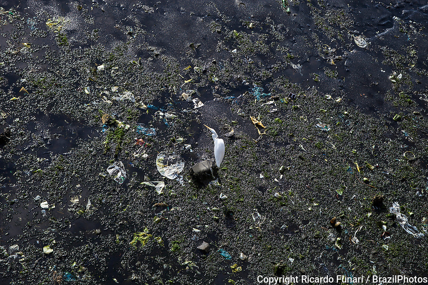 Guanabara Bay's once rich and diversified ecosystem has suffered extensive damage in recent decades, particularly along its mangrove areas - egret looks for some food among the garbage beside Rio de Janeiro International airport, Brazil.