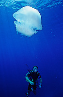 Jelly Fish and Diver