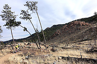 Mountain biking on the trails of Buffalo Creek, near Pine, Colorado.