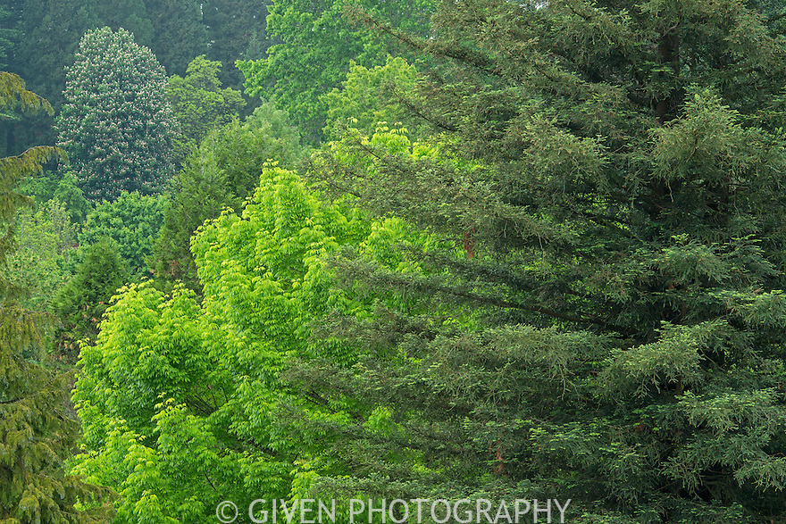 View of forest in Hoyt Arboretum, Oregon