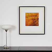 "Preston: Autumn Trees, Digital Print, Image Dims. 13"" x 13"", Framed Dims. 27.5"" x 25.25"""