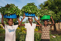 AWright_UG_001803.tif<br />