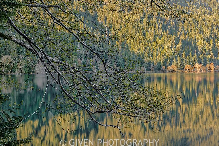 Lake Crescent, Olympic National Park, Washington