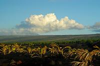 sunrise at Puu Oo vent and the July 21 st lava flow, viewed from Kaimu beach, Kalapana, Hawaii, Big Island of Hawaii
