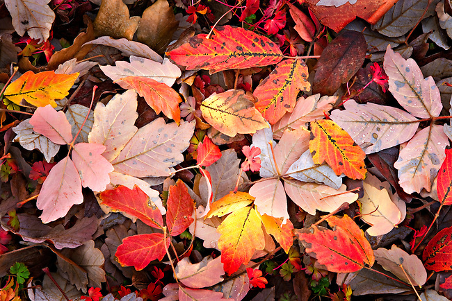 abstract leaves design of autumn leaves on ground.