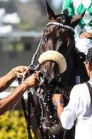 John Scott (#6) winner of the Harry F. Brubaker Stakes at Del Mar Race Course in Del Mar, California on September 1, 2012.