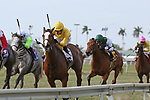 HALLANDALE BEACH, FL - MARCH 31:   #2 Lull with jockey Jose L Ortiz_on board, wins the Honey Fox Stakes GII at Gulfstream Park on March 31, 2018 in Hallandale Beach, Florida. (Photo by Liz Lamont/Eclipse Sportswire/Getty Images)