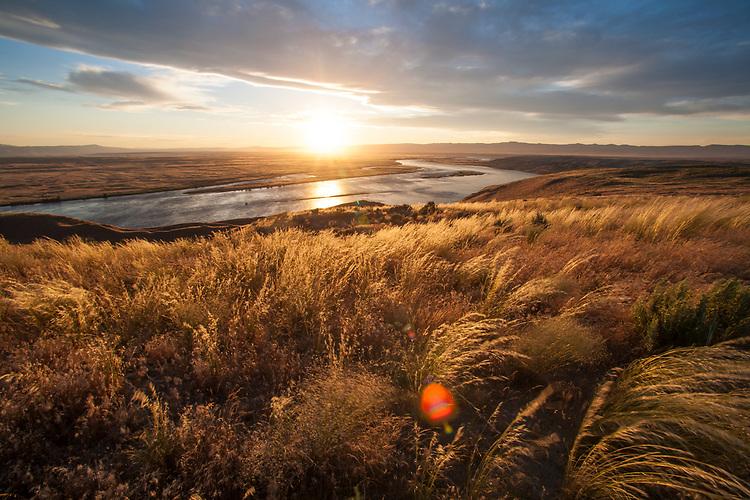 Hanford Reach National Monument, White Bluffs, Wahluke Slope, Columbia River, shrub steppe habitat, grassland, Columbia Basin, Eastern Washington, Washington State, Pacific Northwest, USA,