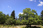 Israel, Lower Galilee, Zippori forest