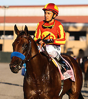 Executiveprivilege winner of the Del Mar Debutante at Del Mar Race Course in Del Mar, California on September 1, 2012.