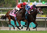 ARCADIA, CA: October 06: #8 Sharp Samurai (outside) battles #9 Fly to Mars to win the Grade II City Of Hope Mile at Santa Anita Park on October 06, 2018 in Arcadia, California (Photo by Chris Crestik/Eclipse Sportswire)