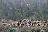 piles of logs along forest road