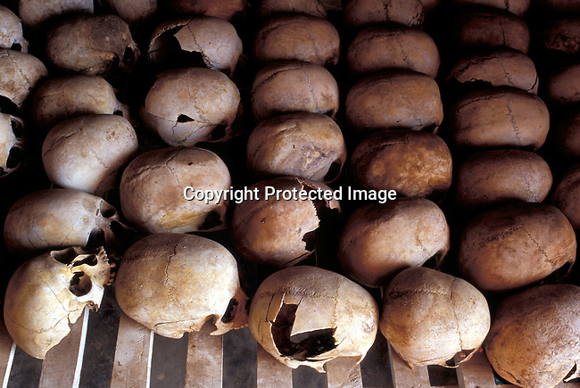 dicorwa00095.Country Rwanda. Human skulls displayed at Murambi Genocide memorial outside Gikongoro, Rwanda. In the hills and villages in this area, thousands of Tutsis and moderate Hutus were killed in 1994. About 100.000 prisoners accused of the genocide are still sitting in prisons 9 years later. Rwanda is currently trying to cope with these huge problems and some prisoners that have confessed to crimes can be tried in village trials, Gacacas, who are now operating all over the country..©Per-Anders Pettersson/iAfrika Photos