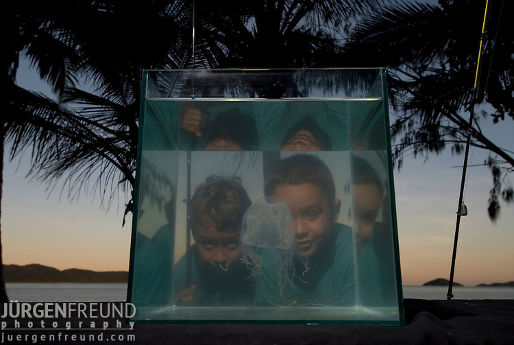 Boys enthralled with deadly box jellyfish in tank by the beach, Chiropsalmus sp.