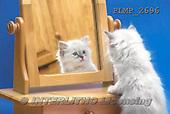Marek, ANIMALS, REALISTISCHE TIERE, ANIMALES REALISTICOS, cats, photos+++++,PLMP2696,#a#