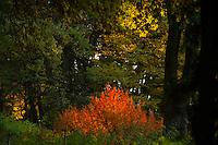 Autunno al Parco Sigurtà / Autumn in Sigurtà Park