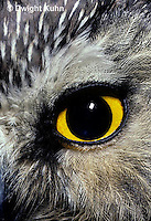 OW11-023c  Saw-whet owl - close up of eye - Aegolius acadicus