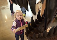 NWA Democrat-Gazette/BEN GOFF @NWABENGOFF<br /> Heyden Garrett, 2, of Bentonville checks out a Tyrannosaurus rex skull on Monday Nov. 23, 2015 while visiting the new Dinosaurs: Fossils Exposed exhibit at the Scott Family Amazeum in Bentonville. The new exhibit runs through March 2016.