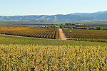 Colorful vineyards change to golden, orange and red during autumn in the Salinas Valley.