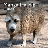 Hungarian animals | Pictures Photos Images & Fotos