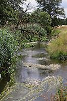 Bach, Bachlauf der Schaale, natürlicher Bachlauf, naturnaher Bach, Tieflandbach, Wiesenbach. rivulet, brook