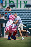 Jacksonville Jumbo Shrimp mascot Scampi during an on field promotion with a fan during a Southern League game against the Tennessee Smokies on April 29, 2019 at Baseball Grounds of Jacksonville in Jacksonville, Florida.  Tennessee defeated Jacksonville 4-1.  (Mike Janes/Four Seam Images)