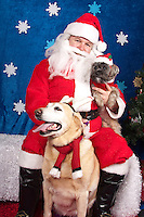 Dogs are photographed with Santa at a fundraiser for Dogs Deserve Better at Pet Pros in Redmond, WA on December 12, 2010. (photo by Karen Ducey)Beth and Oakley are photographed with Santa at a fundraiser for Dogs Deserve Better at Pet Pros in Redmond, WA on December 12, 2010. (photo by Karen Ducey)Beth and Oakley,a shintzu/yorkie and golden lab, are photographed with Santa at a fundraiser for Dogs Deserve Better at Pet Pros in Redmond, WA on December 12, 2010. (photo by Karen Ducey)