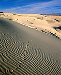 Also Glamis Dunes, Imperial Sand Dunes Recreation Area. Roughly 45 mi (72 km) long by 6 mi (10 km) wide. Spanish word algodones translates to the English word cotton. Chocolate Mountains in background. North Algodones Dunes Wilderness; The federal government protected the northern 25,818 acres (104 km²) in the early 1980s and closed them to vehicles as part of the 1994 California Desert Protection Act (Public Law 103-433). Imperial County, CA.
