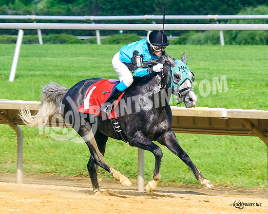 Lazur Hess winning at Delaware Park on 6/4/16