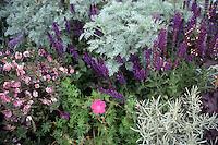 Salvia x sylvestris 'Mainacht' aka 'May Night'  + Artemisia 'Powis Castle', Helichrysum Icicles, Geranium sanguineum, purple Heuchera, color theme purple and pinks blues perennial planting combination of flowering and foliage plants