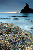 Seastar and sea stack at dusk, Rialto Beach, Olympic National Park, Washington State, USA