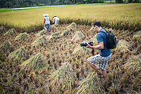 Photographer taking a photo of farmers working in a rice paddy field, Bukittinggi, West Sumatra, Indonesia