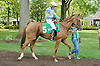 Zucchini Flower before The Walking in Da Sun Stakes at Delaware Park on 7/11/12