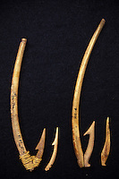 Ancient Hawaiian fishhooks