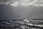 Albatross. Sub Antarctic ocean. Wave breaking.