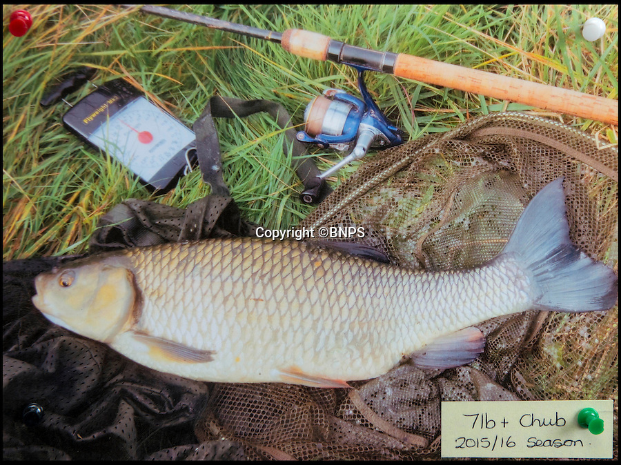 "BNPS.co.uk (01202 558833)<br /> Pic: TomWren/BNPS<br /> <br /> 7lb Chub.<br /> <br /> A mystery fishing ""genius"" has sparked intrigue after pinning photos of his monster catches inside an angling club's riverbank lodge - in an enigma being dubbed 'Good Will Fishing'.<br /> <br /> The anonymous fisherman has systematically worked his way through a tough stretch of the River Avon and pulled in 19 once-in-a-lifetime catches in the last 12 months.<br /> <br /> And much like 1997 film Good Will Hunting, in which Matt Damon's genius character anonymously solves near-impossible mathematical equations while working as a janitor at a prestigious university, the angling Einstein showcases his brilliance in secret."