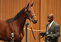 Hip #131 Distorted Humor - Mushka colt sold for $1,650,000 at the Keeneland September Yearling Sale, consigned by Eaton Sales.  September 10, 2012.