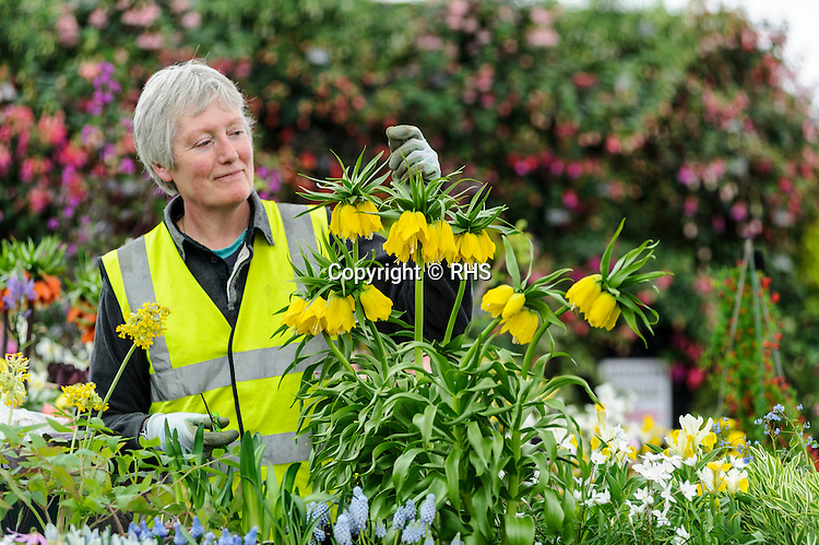 Carole Kimberley - Avon Bulbs in the Floral Marquee at the RHS Show Cardiff 2014