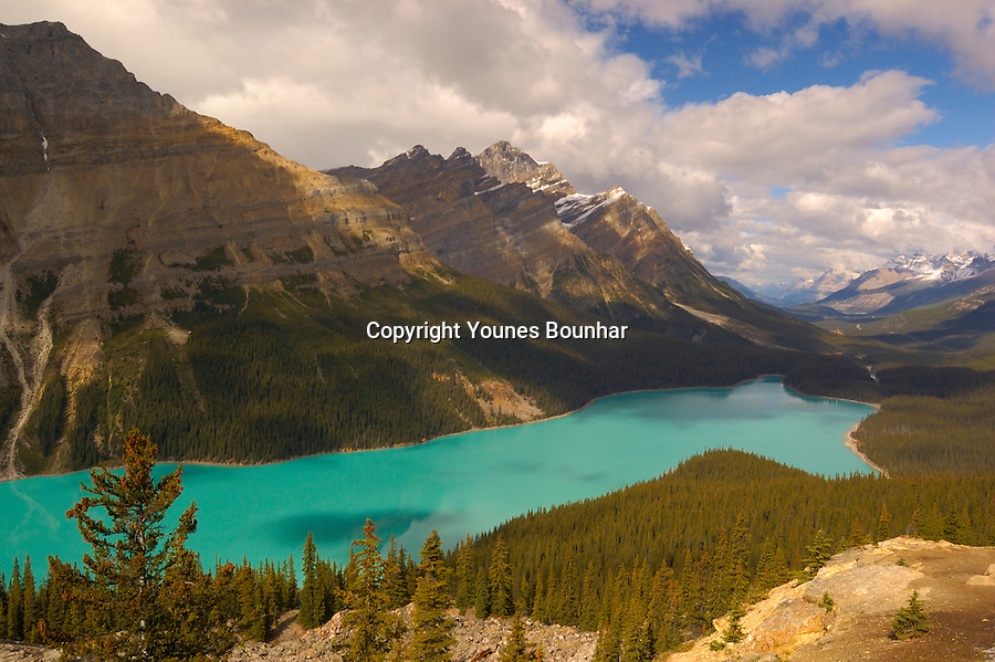 Majestic Peyto Lake as seen from the look out in midday light