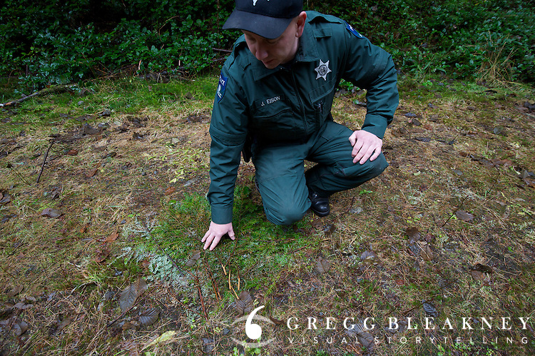 DNR officer Jared Eison searches for clues at a salal theft site in the Queets Valley. Olympic Peninsula, WA State