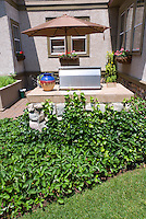 Groundcovers Strawberry fruit patch (Fragaria) with patio, house, BBQ grill, Hedera English ivy, umbrella