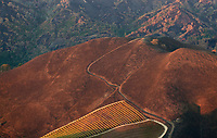 A mountain vineyard survives the Nuns Fire in the Mayacama Mountains, Sonoma County, California, northern California wildfires, 2017
