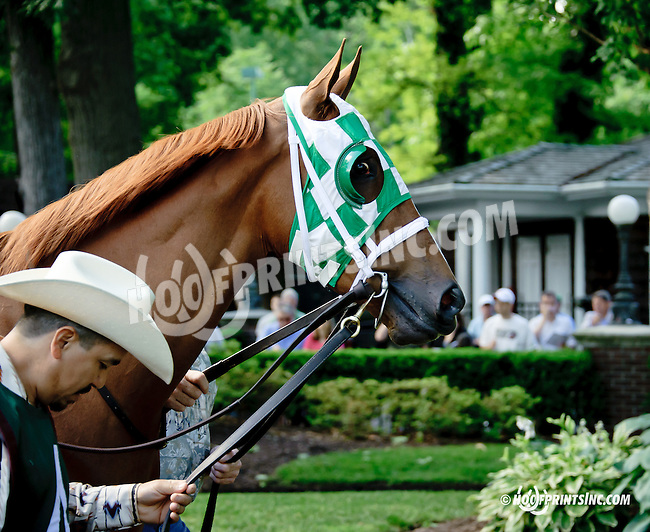 Blue Violet before The Obeah Stakes (gr 3) at Delaware Park racetrack on 6/14/14