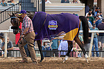 """DEL MAR, CA  AUGUST 17:  #9 Acclimate, wearing his Breeders' Cup cooler, heads back to the barn after winning the Del Mar Handicap (Grade ll) Breeders' Cup """"Win and You're In"""" Turf Division, on August 17, 2019 at Del Mar Thoroughbred Club in Del Mar, CA.(Photo by Casey Phillips/Eclipse Sportswire/CSM)"""