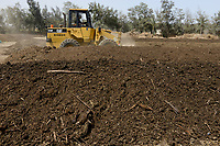 EGYPT, Bilbeis, Sekem organic farm, preparing of organic compost for desert farming / AEGYPTEN, Bilbeis, Sekem Biofarm Herstellung von Kompost fuer Landwirtschaft in der Wueste