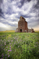 Alfalfa Beauty - Montana (vertical)