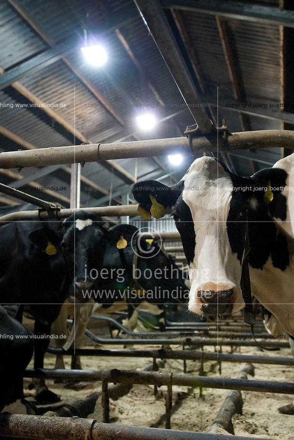 HOLLAND NETHERLAND milk cow farm, stable with light / Niederlande Milchviehbetrieb, Stall mit Licht