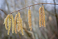 Hazel Catkins, Bruern, The Cotswolds, United Kingdom